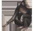 Bild von Schimpanse