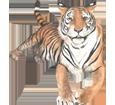 Bild von Tiger